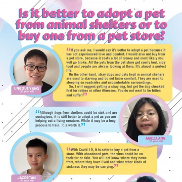Is it better to adopt a pet from animal shelters or to buy one from a pet store?